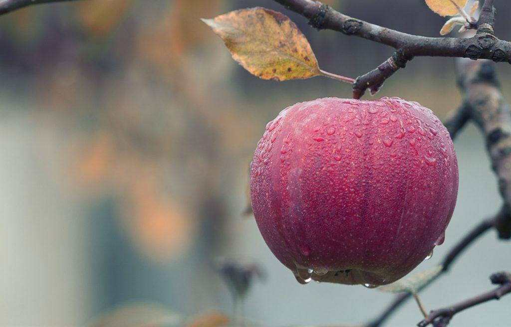 Hi, My Name is Roshani Chokshi and I'm Obsessed with Fairytale Fruit