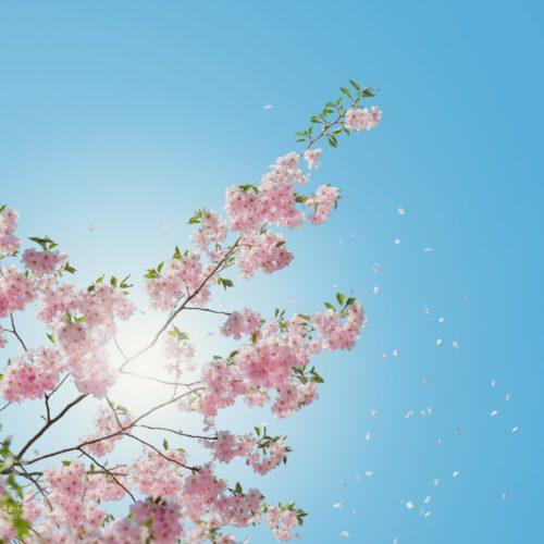 bloomingloveLEAD