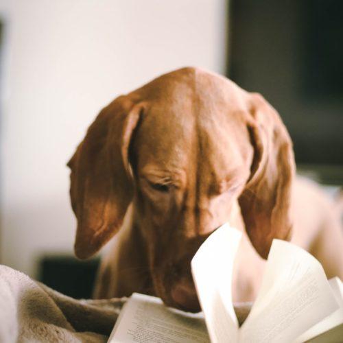 dogbookstagramLEAD