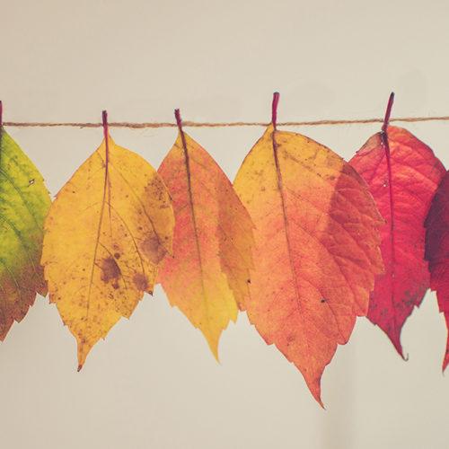 fall_lead2